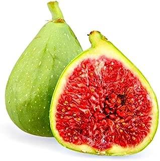 Desert King Fig Tree Ficus Carica Live Plant Dessert Charlie