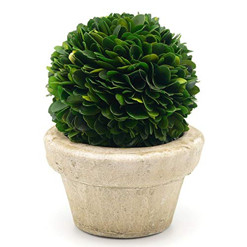 Serene Spaces Living Preserved Boxwood Ball with Small Pot  Natural Indoor Greenery, Simple Care, 5.5