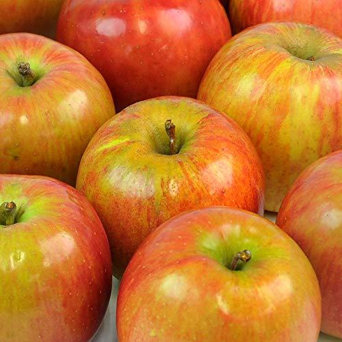 訳あり 青森県産 葉取らず りんご 1kg箱 B品 特別栽培農産物 ジュース用 リンゴ 林檎