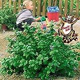 AIMADO Samen-50 Pcs Kräutersamen Verpissdich Pflanze Saatgut-Hält Hunde, Katzen und Kleintiere aus Ihrem Garten fern,für Beete, Töpfe und Balkonkästen