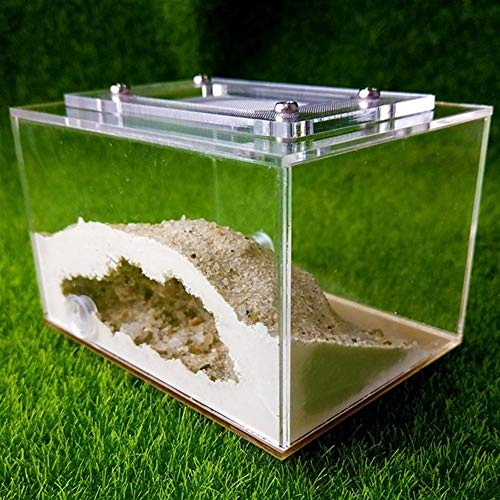 [Ameisen Händler] Professionelle Dsigned Ameisen Farm Ants Nest Formicarium for jungen Queens oder die kleinen Cononies Messor & ampCamponotus (Color : White)