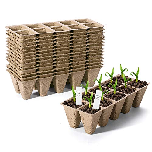 biodegradable tray - 7