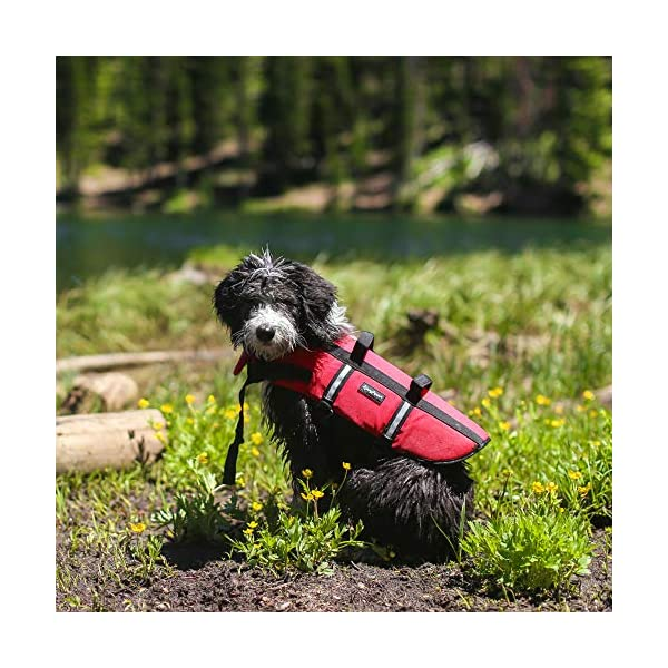Zippy Paws Life Jacket Dog, Red, Small Click on image for further info. 6
