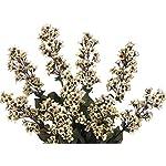 artificial-23-inch-beige-blossom-stock-bush-set-of-6