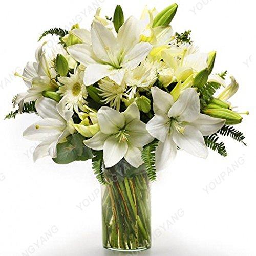 Vente chaude 200Pcs Lily Graines Lily Fleur (Non Lily Bulbes) Lilium Graines de fleurs Faint Parfum Bonsai Plante en pot pour jardin Plantes vertes