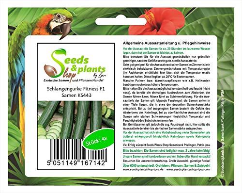 Stk - 4x Schlangengurke Fitness F1-Gurken Samen Gemüse KS443 - Seeds Plants Shop Samenbank Pfullingen Patrik Ipsa