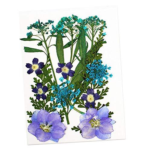 Baosity 13x Flor Seca Prensada Real para Manualidades de Resina Epoxi DIY Fabricación de Joyas Arte de Uñas - Verde, Individual