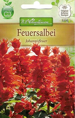 Chrestensen Feuersalbei 'Johannisfeuer'