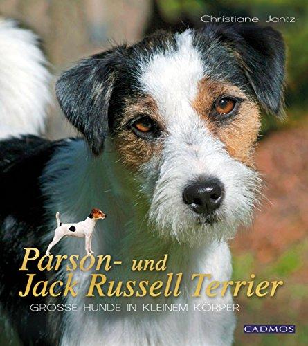 Parson- und Jack Russell Terrier: Große Hunde in kleinem Körper (Hunderassen)