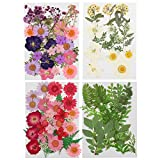 96 Pieces Assorted Dried Flowers Leaves Real Natural Dried Flowers Colorful Pressed Flowers Daisies Multiple DIY Dry Flowers for DIY Resin Jewelry Crafts Nail Floral Decors