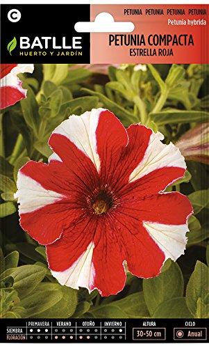 Semillas de Flores - Petunia Compacta estrella roja - Batlle