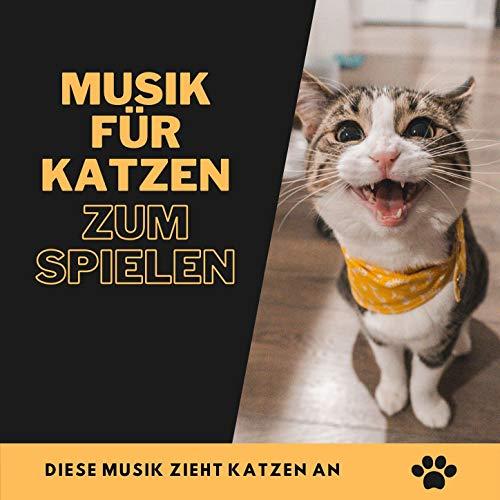 Musik für Katzen zum Spielen