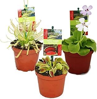 Dionaea + Nepenthes + drosera+ pinguicula + 4 plantas carnívoras