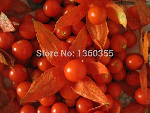 Physalis Pubescens Graines, Physalis Pubescens Potted, Graines Lanterne fruits, 100pcs, fruits jardin