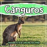 Canguros: ¡Descubre fotos de canguros para niños!