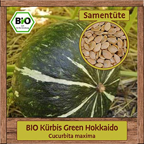 Samenliebe BIO Kürbis Green Hokkaido Cucurbita maxima Saatgut samenfest in BIO Qualität ÖKO-DE-007 reicht für ca. 5 Pflanzen