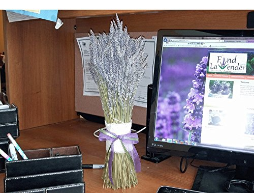 """Findlavender Lavender Jumbo Bundle- 22"""" Tall - Great Decoration for Any Place in Your House - Made in the USA"""