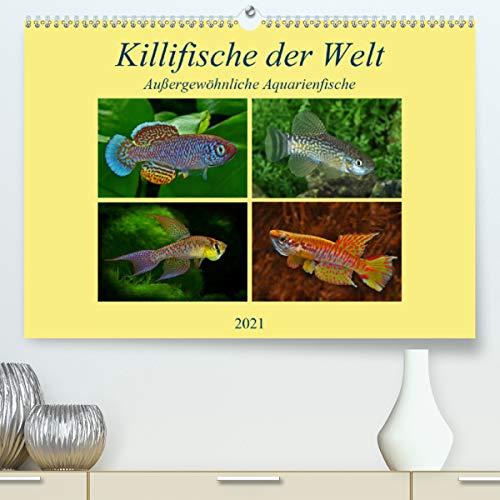 Killifische der WeltCH-Version (Premium, hochwertiger DIN A2 Wandkalender 2021, Kunstdruck in Hochglanz)
