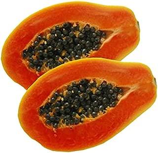 Florida Red Royale Papaya Seeds (Carica papaya) 20+ Non-GMO Tropical Fruit Tree Seeds