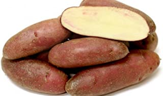 french fingerling seed potatoes
