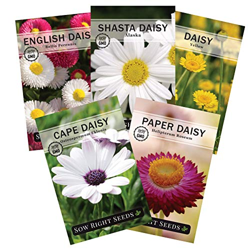 Sow Right Seeds - Daisy Flower Seed Collection for Planting, Beautiful Annual and Perennial Flowers to Plant in Your Garden; Non-GMO Heirloom Seeds; Wonderful Gardening Gift