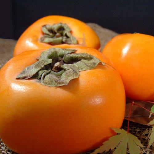 種なし柿 約3.5〜4kg [14〜18個入] 特選ギフト 赤秀 紀州 和歌山 西浦さんちの たねなし柿