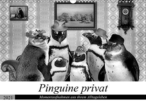 Pinguine privat (Wandkalender 2021 DIN A3 quer)