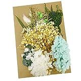 Flores secas naturales mezcladas coloridas margaritas hojas hortensias secas flores prensadas para arte de resina, manualidades, flores secas para joyería de resina (estilo B)