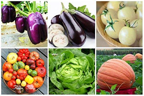 6Kinds populaires légumes Graines de poireau poivre graines pour jardin Facile à cultiver 4