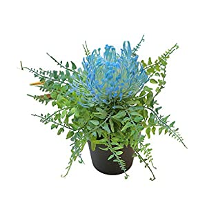 Potted Artificial Protea Flower Bonsai Stage Office Garden Wedding Home Party,Artificial Plants & Flowers for Home Wedding Office Decor DIY Crafts Gift – Light Blue