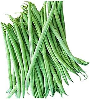 Burpee Stringless Green Bean Seeds - Organic - 50 Seeds