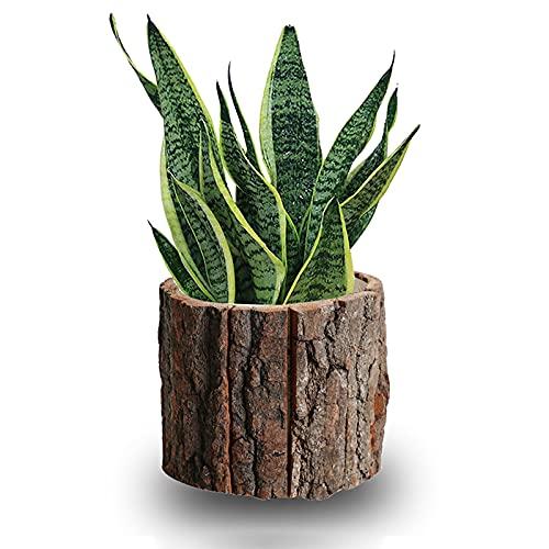 Legno Fioriera,Piccolo Registro Verticale Vasi Per Piante,Rustico Vasi Succulenti Bambù Vasi Per Interna All Aperto Giardino Arredamento Artistico-Legno di canfora 12x11cm(5x4inch)