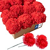 Royal Imports Artificial Carnations, Silk Faux Flowers, for Funeral Arrangements, Wedding Bouquets, Cemetery Wreaths, DIY Crafts - 100 Single 5' Stems - Red