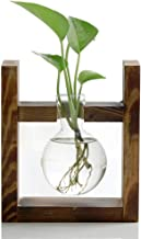 Ivolador Desktop Glass Planter Bulb Vase with Retro Solid Wooden Stand for Hydroponics..