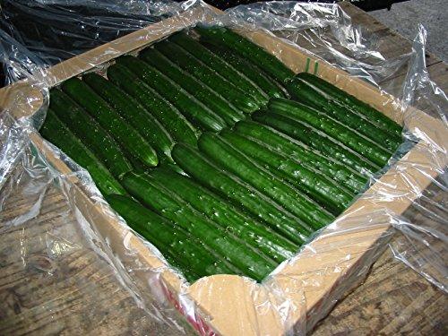 宮崎県等国内産 胡瓜(きゅうり)5kg Mサイズ 約45本入り 秀品