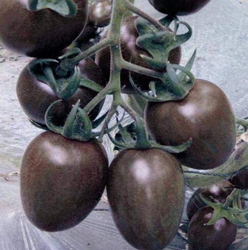 100 pcs/paquet Précipité nouvelles Plantes d'extérieur Promotion Jardin semences de tomates en pot fruits Bonsai Balcon de semences de légumes 14