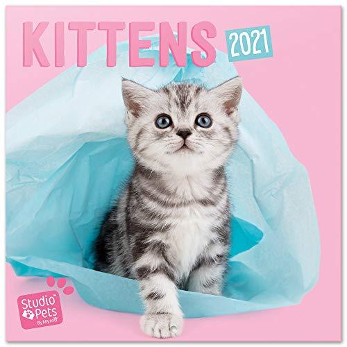 Grupo Erik CP21008 - Calendario de pared 2021 Studio Pets Kittens, 30x30 cm