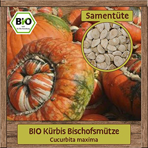 5 BIO Kürbissamen Sorte Bischofsmütze Cucurbita maxima Gemüsesamen Saatgut BIO Qualität DE-ÖKO-007 für ca. 3 Pflanzen