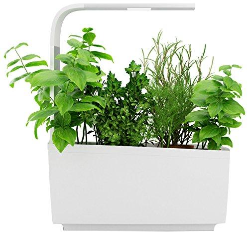 Tregren T6 Potager d'intérieur Connecté 6 plantes, Kit prêt à pousser et Jardinière Autonome pour herbes...