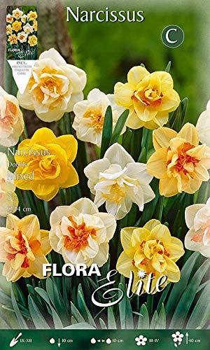 Flora Elite 398308 Narzisse Mischung (Narzissenzwiebeln)