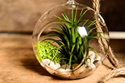 Terrariums make nice gift ideas for the letter T