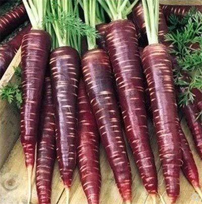 Bloom Green Co. 0,2018 Haut Qaulity de carotte plantes-Rouge Rare légumes coeur de carotte-sucré, délicieux fruits savoureux bonsaïs carotte: 2