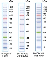 prestained protein ladder