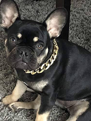 Panelize ® Hundeschmuck Halsschmuck edel Goldfarbene Hundekette pompös Größenverstellbar
