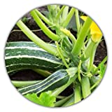 zucchino nero, 50 semi, a basso contenuto calorico, ricco di vitamine, facile da coltivare, raccolto dopo 3 mesi
