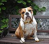RETRIEVERLEINE | MOXONLEINE | Hundeleine 'Elegant', oliv-goldgelb, 180 cm, 6mm MIT Zugstop, mit Hirschhornstop & Takeling | geflochtene Hunde-Leine mit integriertem Halsband | Agilityleine | Retriever-Leine - 4