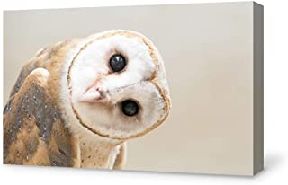 SIGNFORD Canvas Wall Art Adorable Funny Owl Canvas Painting Wall Poster Decor for Living Room Framed Home Decorations - 16x24 inches