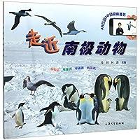走进南极动物