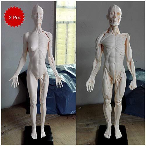 WJH 60 cm Modelo Anatómico Humano Arte Maniquí Muscular músculo-esquelético Estructura de la Pintura Escultura Cuerpo Blanco (Hombre + Mujer)