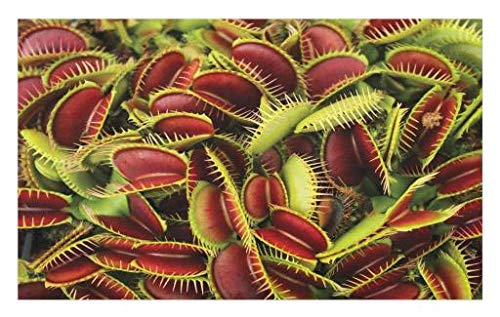 Lunarable Horror House Doormat, Carnivorous Plant Frightening Botanic Foliage Danger Killer Nature Artwork, Decorative Polyester Floor Mat with Non-Skid Backing, 30' X 18', Maroon Green